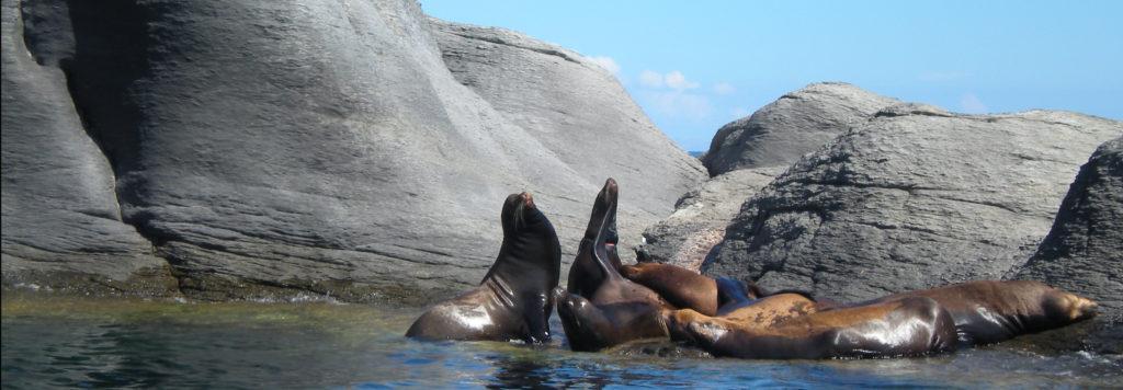 خلیج کالیفرنیا در فهرست میراث جهانی در معرض خطر قرار گرفت