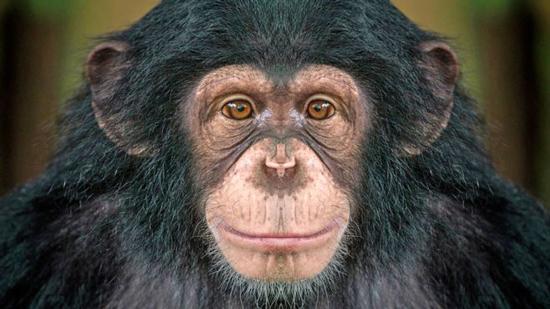 باهوش ترین حیوانات روی زمین را بشناسید
