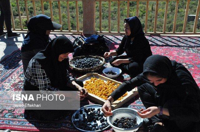 زنان روستایی در فرآوری آلو به صورت سنتی در طرق سهم عمده دارند