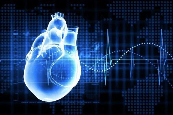 طراحی و ساخت یک داربست رسانا برای مدل سازی قلب